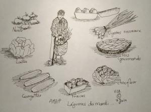 7 juin © Amap Les légumes du mardi et +