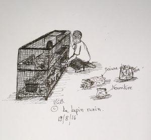 19 août © le lapin nain